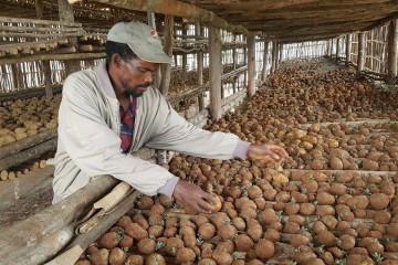 희망의 씨앗을 심어요 - 에티오피아 씨감자 프로젝트